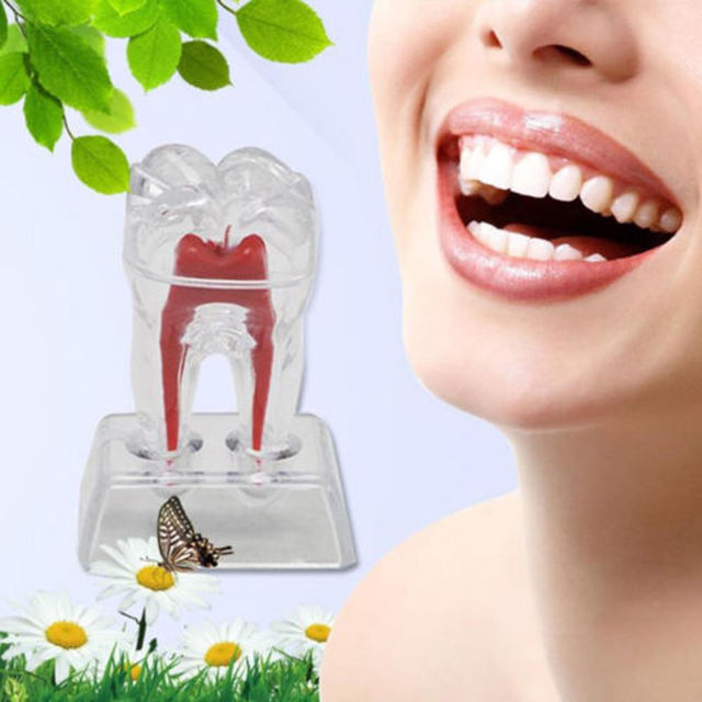 1pcs Small Dentist Dental Crystal Base Hard Plastic Teeth Tooth Molar Model Separable 5.5cm*5cm*7cm