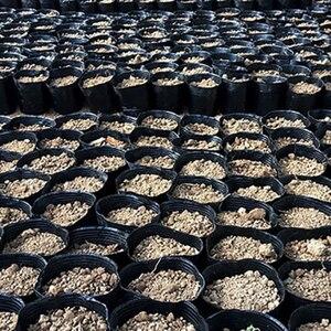 Image 3 - 100 adet küçük Mini toprak saksı kil seramik çömlek ekici kaktüs saksı etli kreş tencere siyah ev bahçe dekor