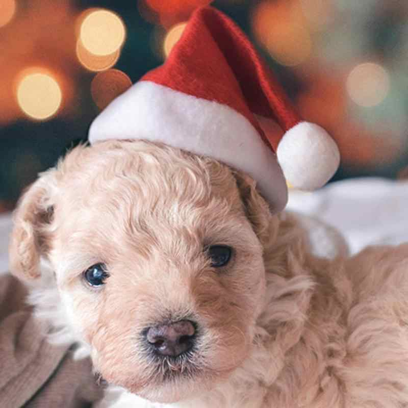 Navidad mascota gato perro Santa Claus sombrero Navidad Año Nuevo felpa gorra Navidad Fiesta hogar decoraciones suministros invierno cálido