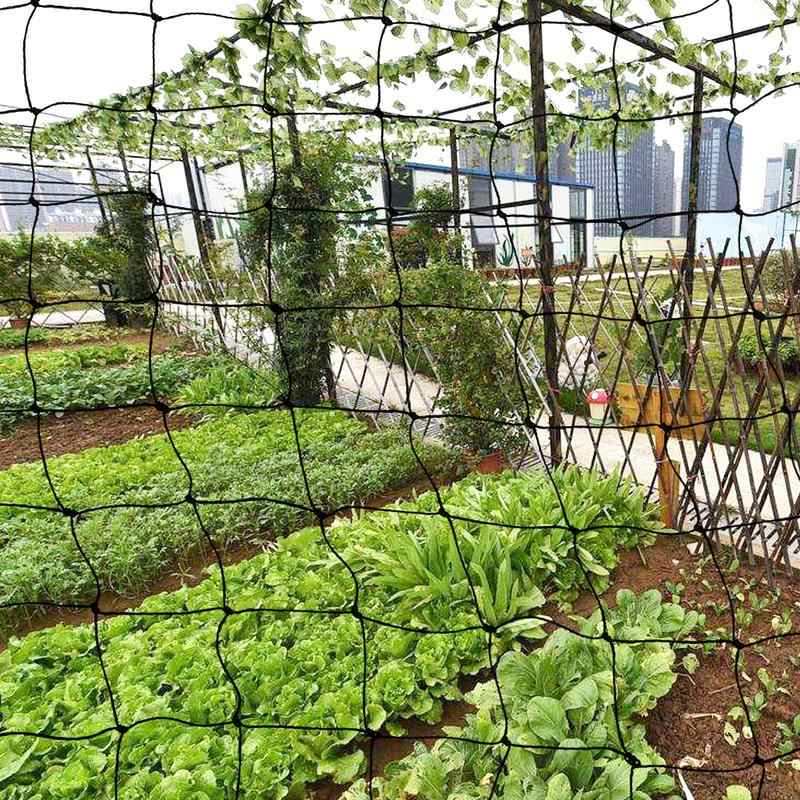 Garden Anti Bird Netting Heavy Duty Net Strong Pigeon Chicken Cat Run 50mm  Mesh Insect Netting Garden Accessories