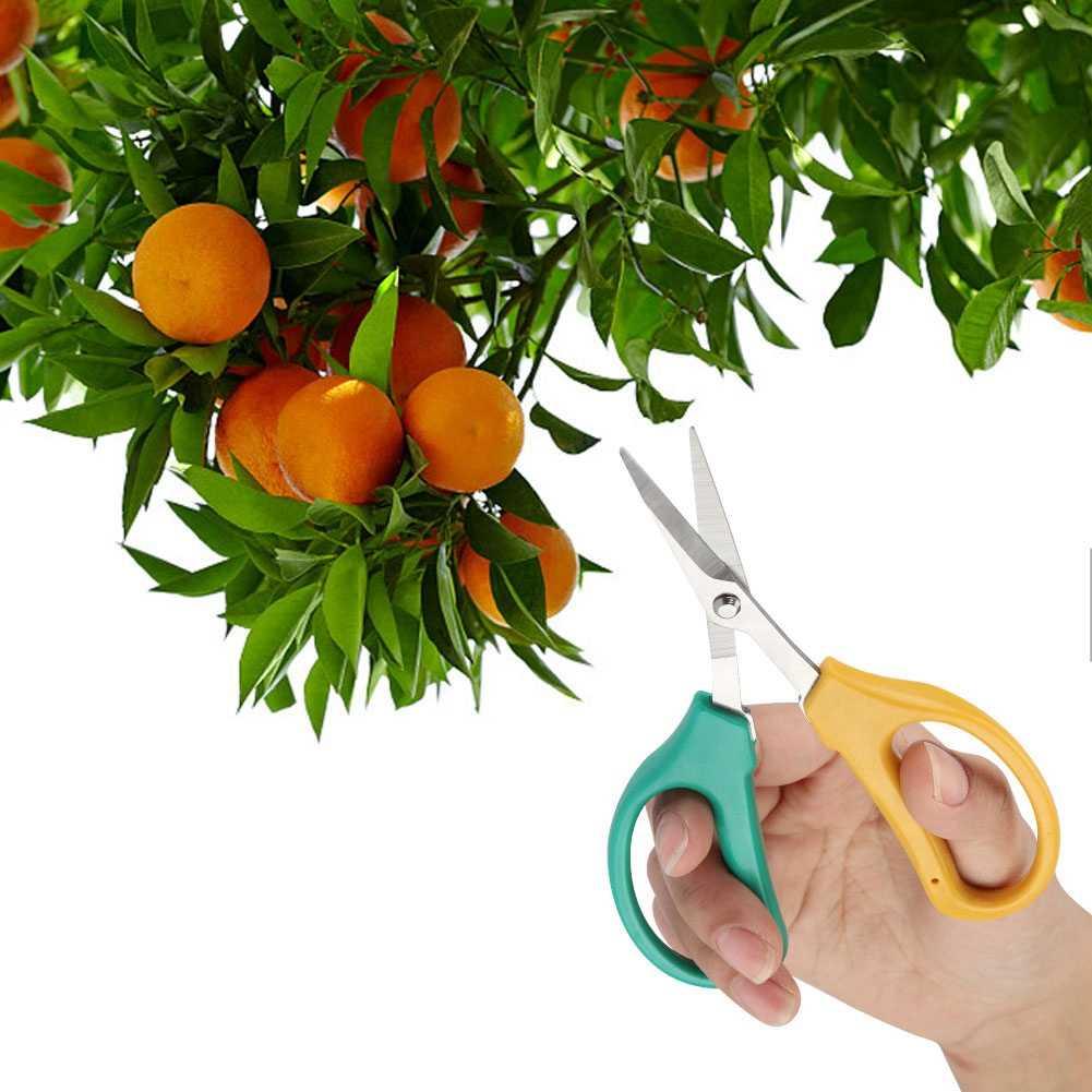 15,2X4,2 cm de acero inoxidable para jardín, tijeras de podar de mano, tijeras de podar, cortadoras, plantas de podar, herramienta de arbusto para frutas y verduras