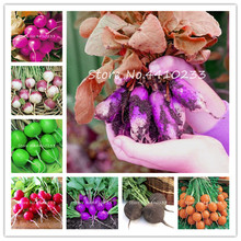 US $0.32 60% OFF|200pcs Cherry Radish Bonsai, Chinese Red Radish Mix Color Organically Fruits Vegetable Rainbow Radish Bonsai plant-in Bonsai from Home & Garden on Aliexpress.com | Alibaba Group
