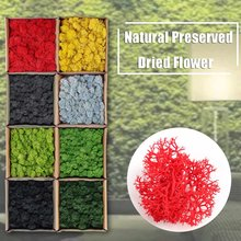 Natural Norwegian Reindeer Moss Preserved Dried Craft Flower Stamen Decoration for Furnishing with all Kinds of Color(China)