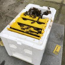 Harvest Bee Hive Box Beekeeping King Box Pollination For Bee Pollination Beekeeping Tool Home Hive Box Beekeeping Equipment цена
