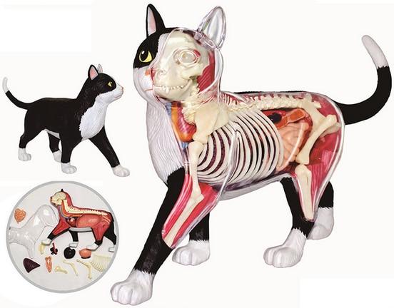 Siyah ve beyaz kedi 4d bulmaca Montaj oyuncak Hayvan Biyoloji organ anatomik modeli tıbbi model beyin