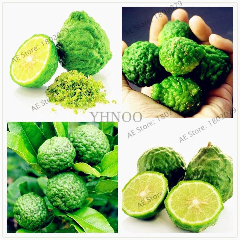 50pcs/bag Key Lime Bonsai, Delicious Potted Organic Fruit Plant,(Citrus Aurantifolia) , Fruit Lemon Tree For Home Garden