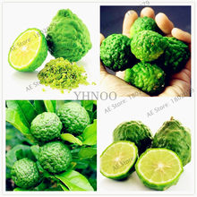 50pcs/bag Key Lime bonsai, Delicious Potted Organic Fruit plant,(Citrus Aurantifolia) , Fruit Lemon Tree For Home Garden(China)