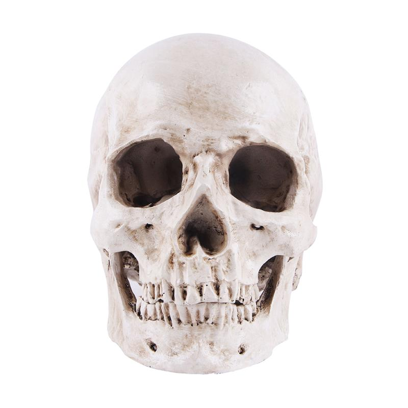 Simulation Resin Lifesize 1:1 Human Skull Model Medical Anatomical Tracing Medical Teaching Skeleton Halloween Decoration Statue