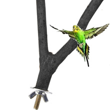 1 шт. попугай деревом вилка бар станция хомяк филиал две точки дерево вилка Дракон кошка белка, птица игрушка для зубов