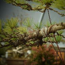 Black Bonsai Aluminum Training Wires Gardening Supplies Decorative Accessories Roll Set Bonsai Tools Garden Supplies