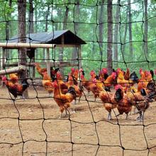 50mm Mesh Bird Netting…