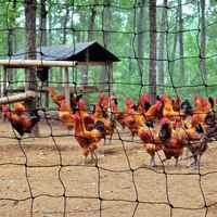 Filet d'oiseau de maille de 50mm pour la maille de Pigeon de héron d'étang de volaille de poulet de jardin pour protéger l'arbre de Fruit de légumes de plantes