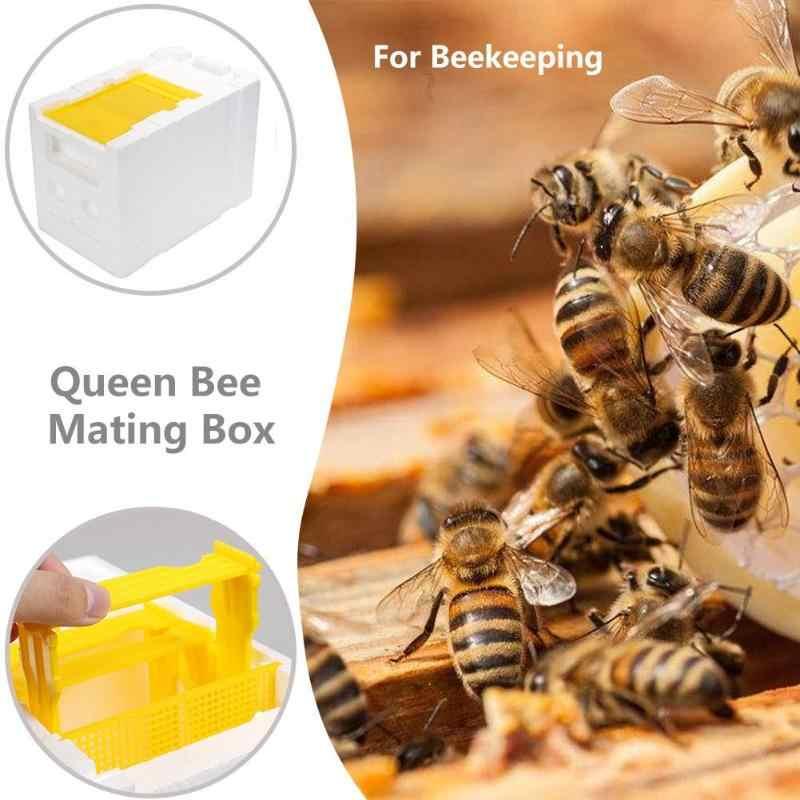 Foam Box Harvest Bee Hive Beekeeping King Box Professional Pollination Box Beekeeping Tool Harvest Bee Hive Solid Cedar Wood