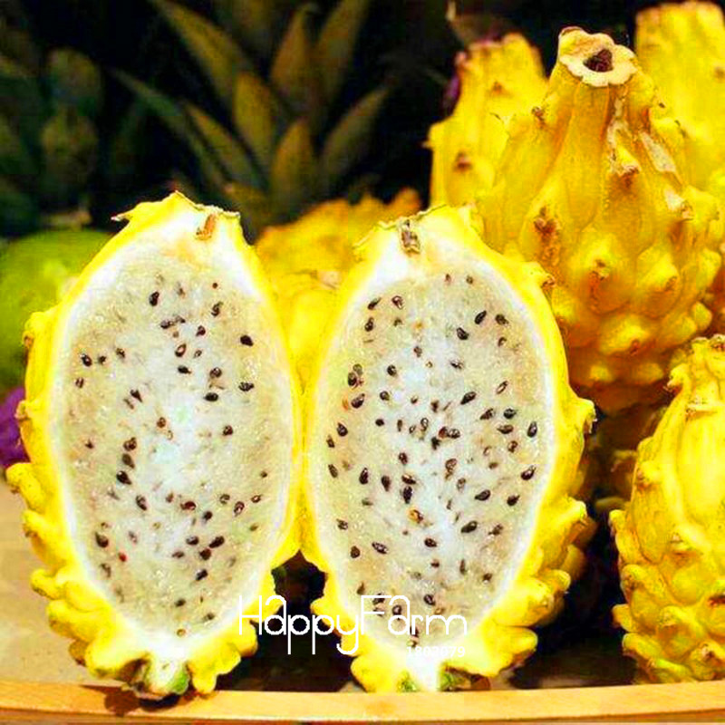 New 2018!Sweet Pitaya Bonsai Tree Plants Dragon Fruit Garden Pitaya Flores Non-gmo Hylocereus Fruit, 100 Plantas/Pack,#EV242E