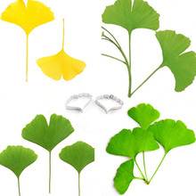 Stainless Steel Ginkgobiloba Leaf Shape Cutting Mould Ginkgo Cutter Clay Tools