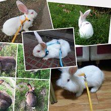 Coleira para coelho de corrida, coleira de coelho macia ajustável, corda de tração para caminhada em corrida e caminhada wxv