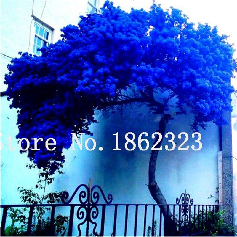 50 шт. Редкие Jacaranda Mimosifolia дерево карликовые деревья Jacaranda цветочные растения в саду Evergreen кустарники семена дерева карликового дерева