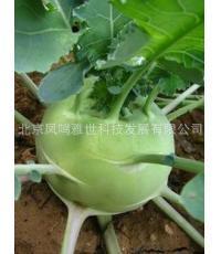Фрукты и овощи Бонсай-зеленый кольраби синий-международные популярные овощи высокого уровня-100 шт.