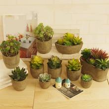 Simulation of Succulent Plants Green Planting Bonsai Tabletop Potted Plant Gift Sedum Micro Landscape with Flowerpot