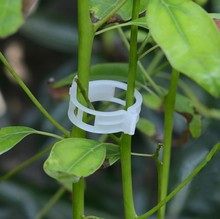 100pcs Tomato Clips Trellis Garden Plant Flower Vegetable Binder Twine Support Greenhouse Clip Supplies