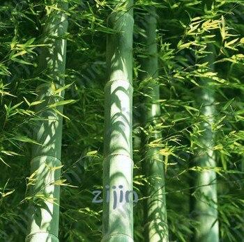50pcs Fresh Giant Bamboo bonsai Rare Lako Tree For Home Garden potted plants Planting