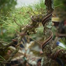 Bonsai Aluminum Training Wires Gardening Supplies Decorative Accessories Roll Set Bonsai Tools