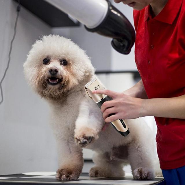 Tondeuse électrique pour animaux domestiques   Rechargeable, faible bruit USB, ensemble de coiffure pour chien, rasage électrique pour chien chat, tondeuse pour toilettage 2019