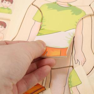 Image 2 - أطفال خشبية لغز لعب هيكل جسم الإنسان متعدد الطبقات لعبة الطوب الطفل التعليم المبكر ذكي التعلم الإدراك لعبة