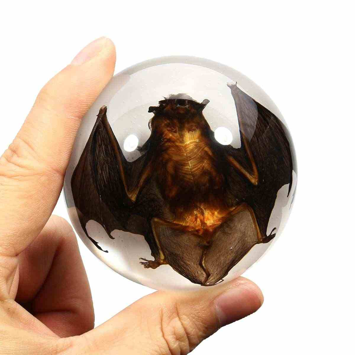 67mm Acrylic Lucite Transparent Bat Specimens Animal Insect taxidermy Bat Amber Educational Teach Supply Biological Collection
