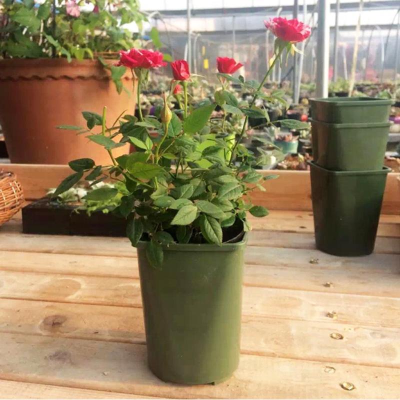 1 Pc Kunststoff Blumentöpfe Cuttage Pflanzung Sukkulenten Pflanzen Blumentopf Garten Liefert Kunststoff Kindergarten Töpfe Home Office Decor
