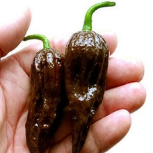 200pcs / pack, Chocolate Naga Jolokia Chilli bonsais, Ghost Pepper - Bhut Jolokia #M386 4 orders international orders