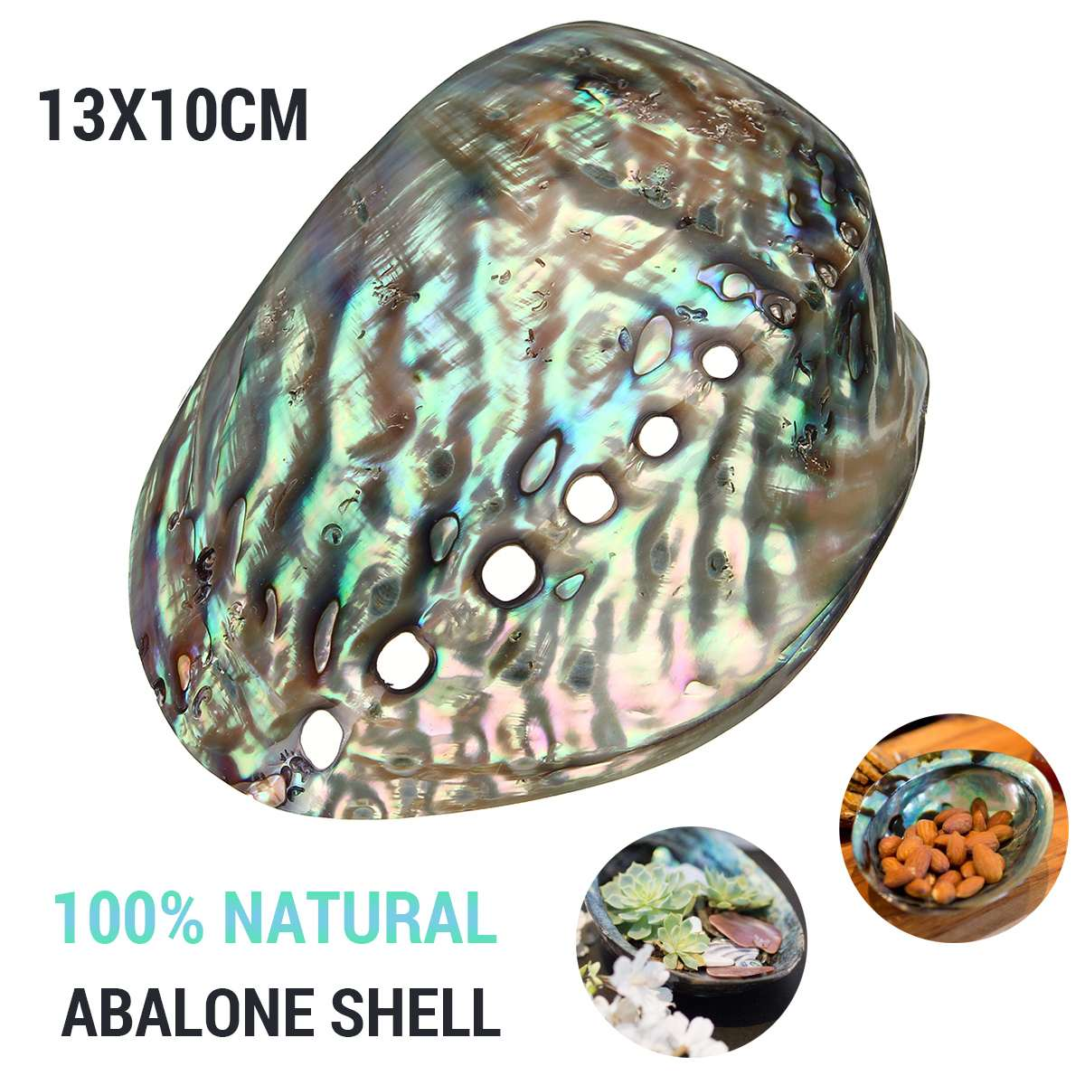 Abalone Shell Natural Shell Craft Jewelry Conch Home Wedding Decoration Charm Pendants For Jewelry Making DIY Necklace Bracelet