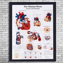Compare Prices on Anatomic Heart Model- Online Shopping/Buy