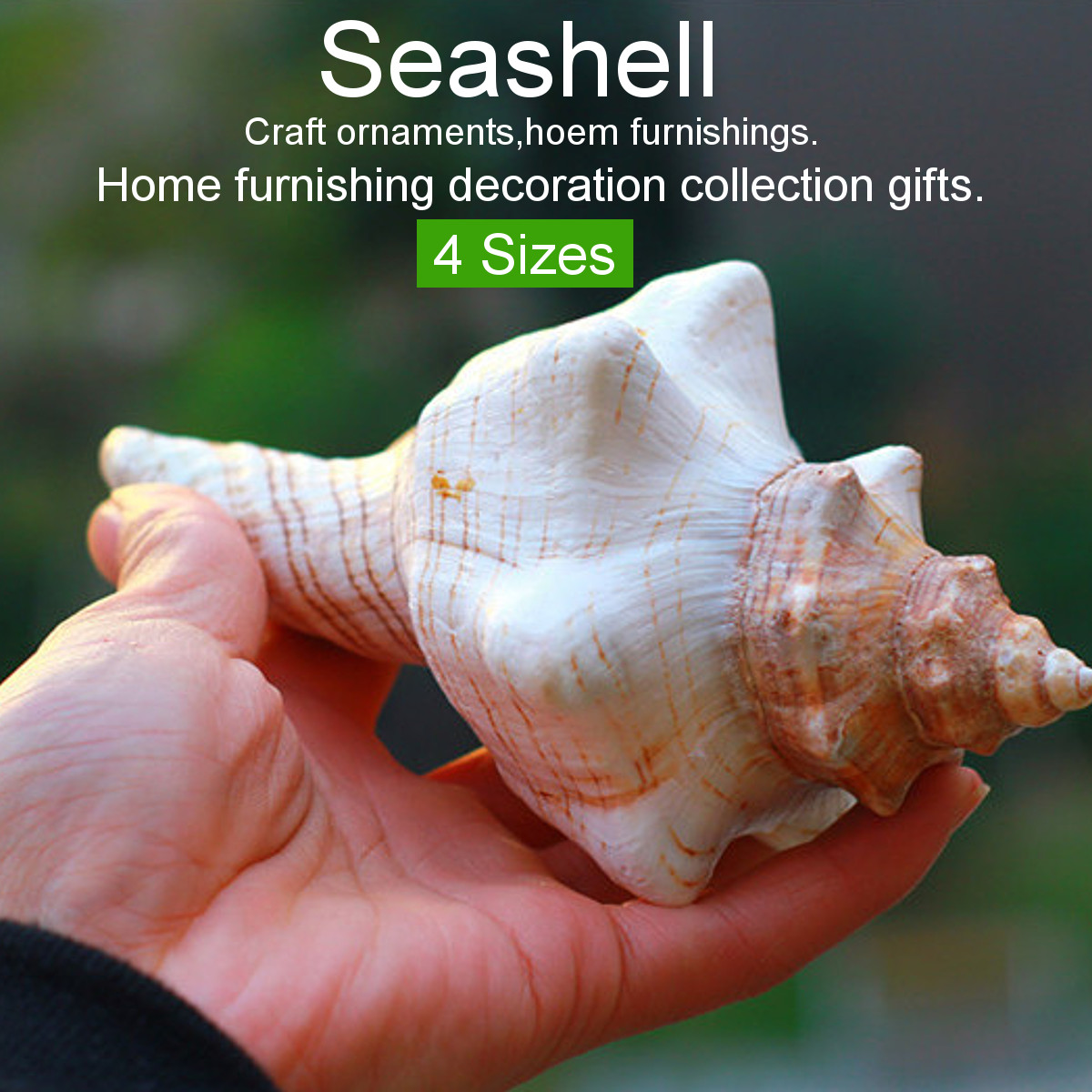Natural Real Conch Sea Shell Ornament Conch Seashell Horn Conch Photograpy Props Fish Tank Decor Furnishings Home Collectible