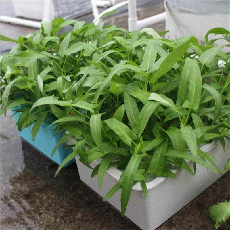 24 furos Casa Caixa De Semente De Cultivo de Plantas de Cultivo sem solo Água Estática Site Sistema Hidropônico Crescer Kit Acessórios Para Jardim