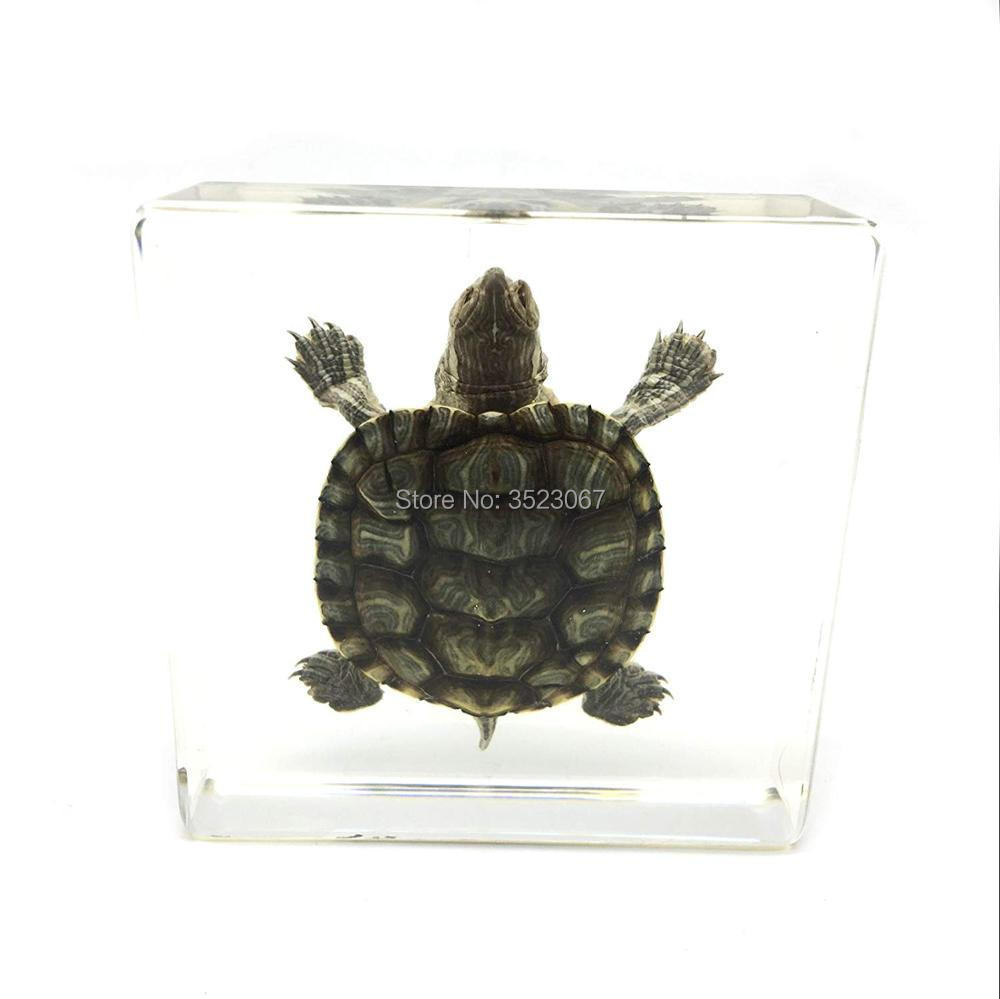Buy Turtle Skeletons And Get Free Shipping On Aliexpress