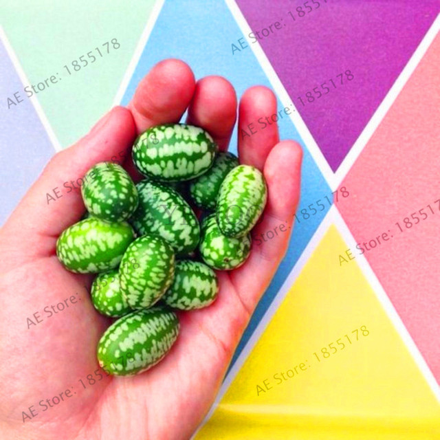 Promotion!100Pcs/bag Watermelon Plant thumb thumb mini watermelon cucumber pickles vegetable Bonsai Peipujinuo Mexico,#DCC9Z7