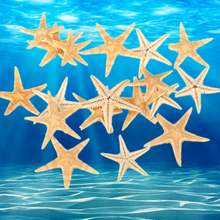 20pcs/set 1.5-2.0cm Natural Sea Star Ocean Sea Animal Fish For Micro Landscape Terrarium Decorative Ornament Crafts(China)