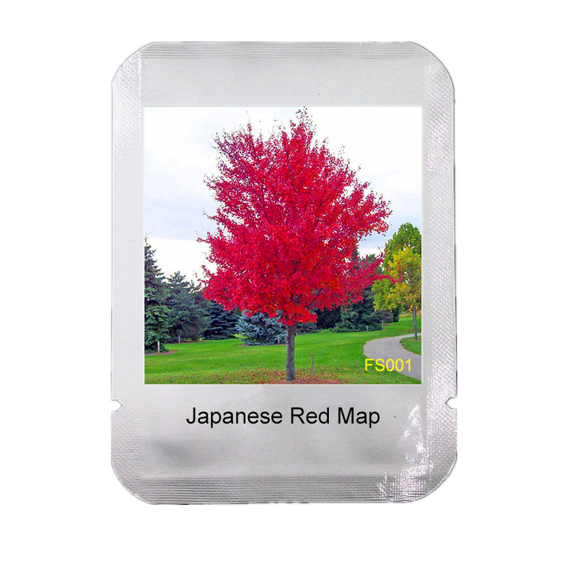 Japan Maple New Bonsai Mysterious Gift,#fs001 Realistic 50 Pcs/pack Japanese Red Maple Tree With Professional Package* Very Beautiful