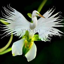 Big Sale!100 Pcs/pack Japanese Radiata bonsai White Egret Orchid garden World's Rare Orchid Species White Baison Flowers Orc