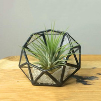 Glass Pentagon Geometric Terrarium Container Box Tabletop Succulent Plant Planter decoration for table, home, office