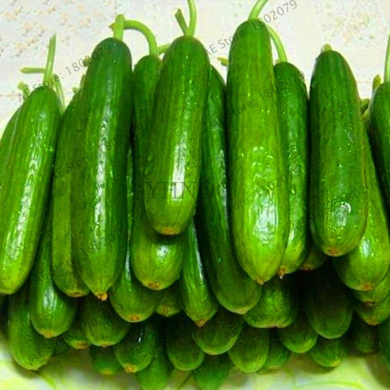 100 pcs Of Cucumber Cuke Seed Green Vegetable Seeds