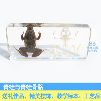 Frog And Frog Bones Animal Specimen Artificial Amber Paperweight Resin Originality Gift Teaching Articles