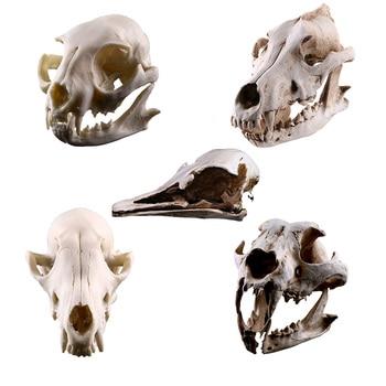 Creative Simulation Wild Animals Skull Creative Resin Craftwork Skullcandy Specimen Photography Props