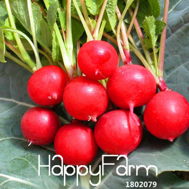 Срок годности! вишня редис бонсай органический балкон горшечные растения выращивание зеленых фруктов овоще-60 шт./пакет, #8YA368