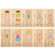 أطفال خشبية لغز لعب هيكل جسم الإنسان متعدد الطبقات لعبة الطوب الطفل التعليم المبكر ذكي التعلم الإدراك لعبة