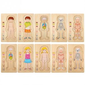 Image 1 - أطفال خشبية لغز لعب هيكل جسم الإنسان متعدد الطبقات لعبة الطوب الطفل التعليم المبكر ذكي التعلم الإدراك لعبة