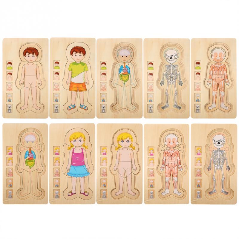 Crianças de madeira quebra-cabeça brinquedos estrutura do corpo humano multicamadas tijolo brinquedo criança educação precoce inteligente aprendizagem cognição brinquedo