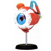 4D анатомическая модель глаза человека анатомия медицинская наука глаз мяч модель школы образовательные человеческие глаза Обучающие аксессуары часть новая