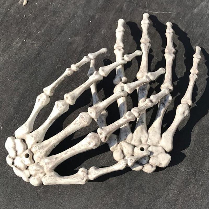 Human Anatomical Bone Skeleton Model Medical  Medical Learn Aid Anatomy Art Sketch 1 Pair Skull Skeleton Hand Bone Halloween